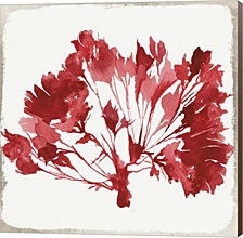 Red Coral Iv By Aimee Wilson Canvas Art