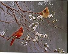 Spring Glory By Wanda Mumm Canvas Art