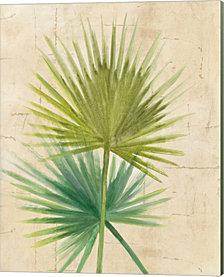 Fan Palm By Albena Hristova Canvas Art