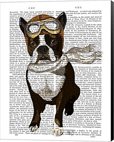 Boston Terrier Flying Ace by Fab Funky Canvas Art