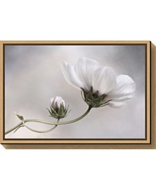 Simply Cosmos by Mandy Disher Canvas Framed Art