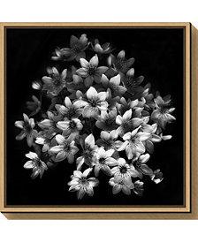 Amanti Art Early Sensation by Yvette Depaepe Canvas Framed Art