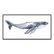 Humpback Whale Youth Framed Printed Canvas