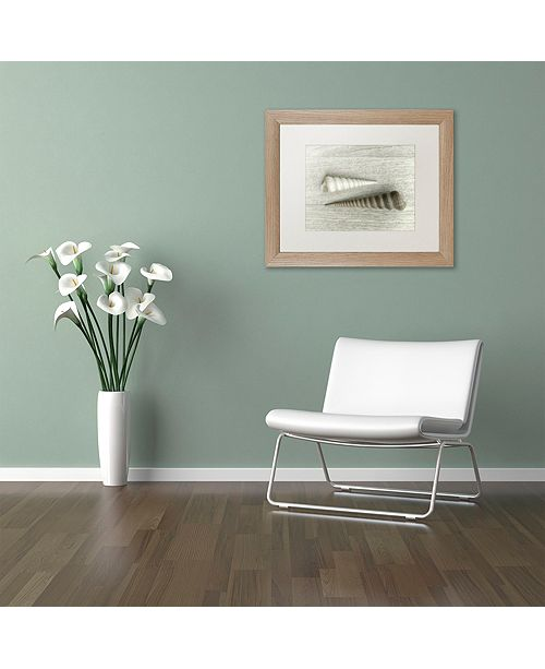 "Trademark Global Cora Niele 'Sea Snail Shells' Matted Framed Art, 11"" x 14"""