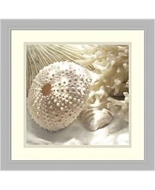 Amanti Art Coral Shell I Framed Art Print