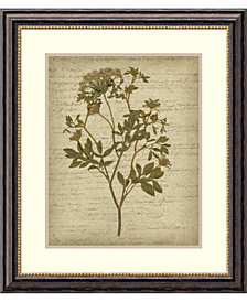 Amanti Art Romantic Pressed Flowers IV  Framed Art Print
