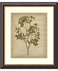 Amanti Art Romantic Pressed Flowers IV  Framed Art Print