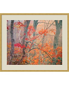 Amanti Art Maple Trees In Fog Near Eagle Lake, Acadia National Park, Maine, 1990  Framed Art Print