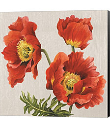 Poppies on Silk by Judy Shelby Canvas Art