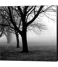 Trees by PhotoINC Studio Canvas Art