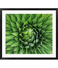Close up of Giant Lo by Martin Zwick / Danita Delimont Framed Art
