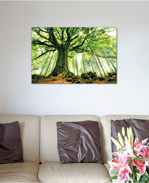 "iCanvas ""Ponthus' Beech"" by Christophe Kiciak Gallery-Wrapped Canvas Print (18 x 26 x 0.75)"