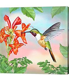 Bahama Woodstar in Honeysuckle by Rosiland Solomon Canvas Art
