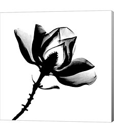 Magnolia X-Ray by Bert Myers Canvas Art