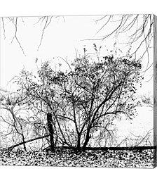 Winter Design by Harold Silverman Canvas Art