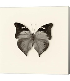 Butterfly VII by Debra Van Swearingen Canvas Art