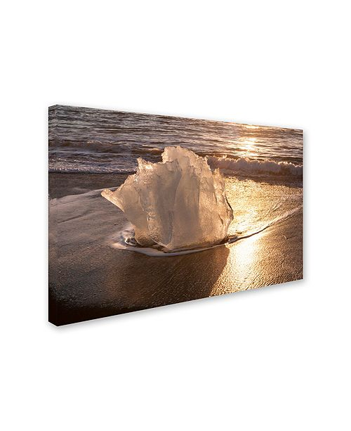 "Trademark Global Michael Blanchette Photography 'Ice Tulip' Canvas Art, 12"" x 19"""