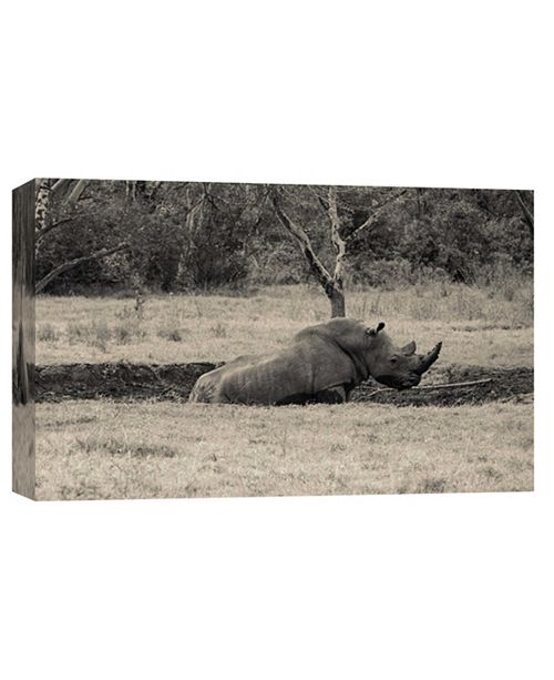 PTM Images Rhino Decorative Canvas Wall Art