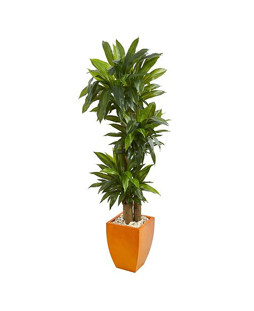 Nearly Natural 5.5' Dracaena Plant in Orange Square Planter - Real Touch