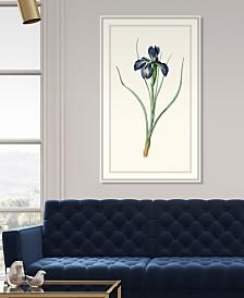 """Redoute Iris IV Framed Giclee Wall Art - 28"""" x 46"""" x 2"""""""