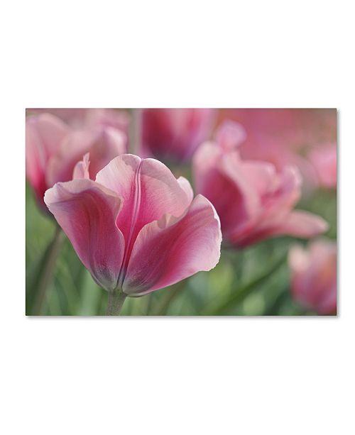 "Trademark Global Cora Niele 'Tulip Mirella Pink' Canvas Art - 32"" x 22"" x 2"""