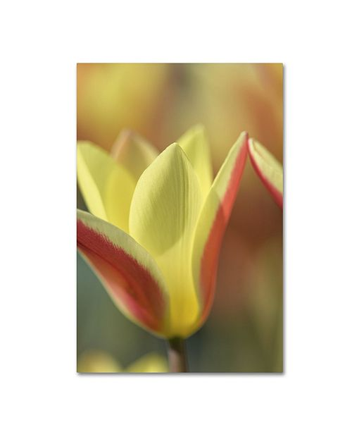 "Trademark Global Cora Niele 'Tulip Tinka' Canvas Art - 19"" x 12"" x 2"""