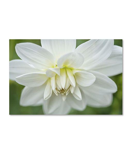 "Trademark Global Cora Niele 'White Dahlia' Canvas Art - 32"" x 22"" x 2"""