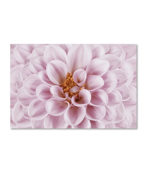 "Trademark Global Cora Niele 'Pink Dahlia' Canvas Art - 24"" x 16"" x 2"""
