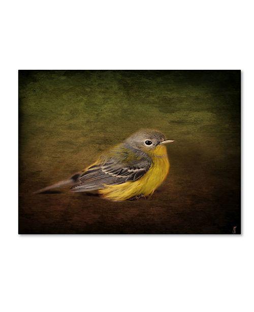 "Trademark Global Jai Johnson 'Baby Warbler' Canvas Art - 24"" x 18"" x 2"""