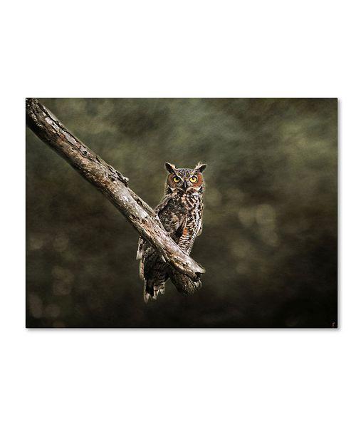 "Trademark Global Jai Johnson 'Great Horned Owl At Shiloh' Canvas Art - 24"" x 18"" x 2"""