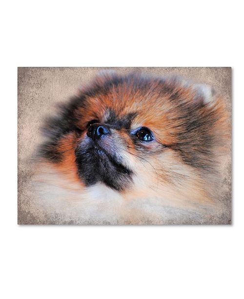 "Trademark Global Jai Johnson 'Pomeranian Portrait' Canvas Art - 24"" x 18"" x 2"""