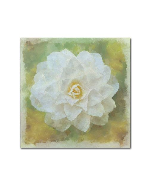 "Trademark Global Cora Niele 'Camelia White' Canvas Art - 24"" x 24"" x 2"""