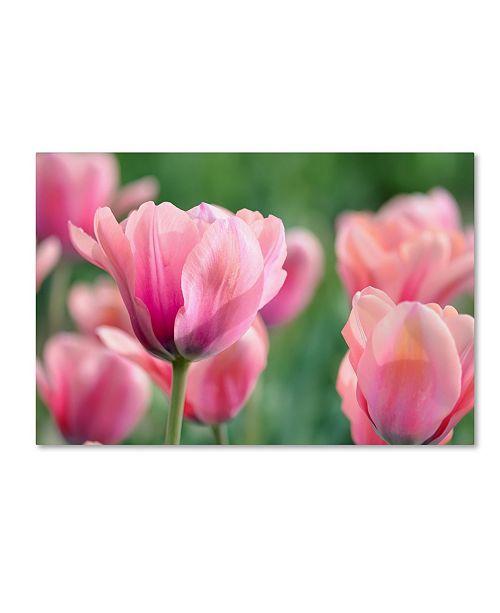 "Trademark Global Cora Niele 'Pink Tulips' Canvas Art - 19"" x 12"" x 2"""