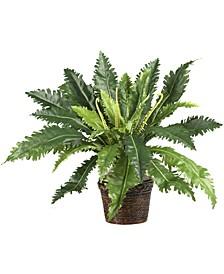 Marginatum w/ Wicker Basket Silk Plant