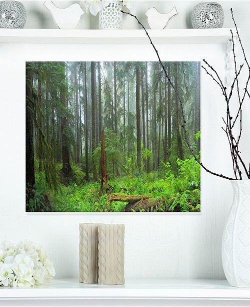 """Design Art Designart 'Hoh Rain Forest' Landscape Photography Metal Wall Art - 20"""" X 12"""""""