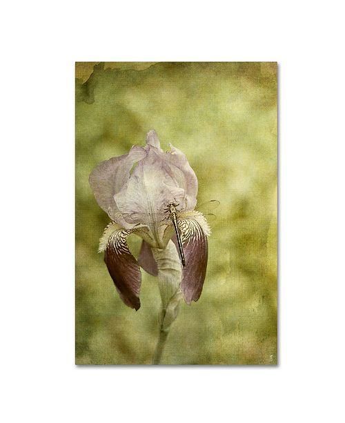 a81e1fbd2a3 ... Trademark Global Jai Johnson  Vintage Iris And Dragonfly  Canvas Art -  19