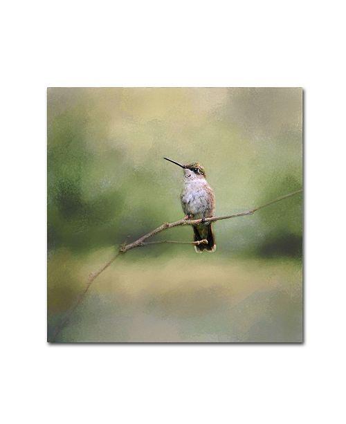 "Trademark Global Jai Johnson 'Tiny Visitor Hummingbird' Canvas Art - 18"" x 18"" x 2"""