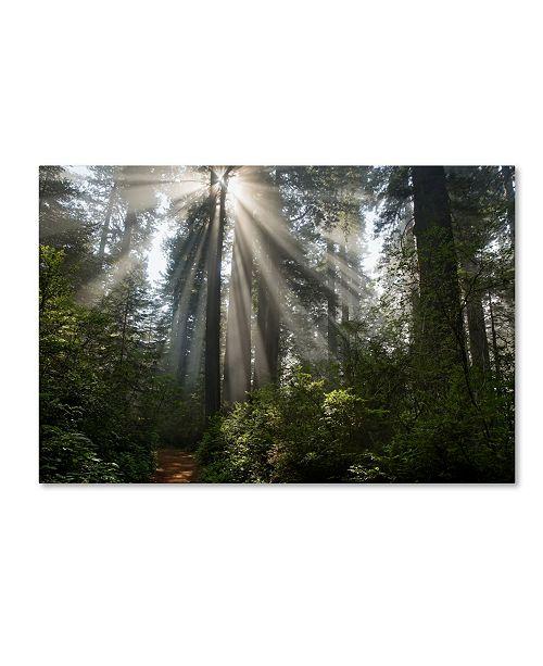 "Trademark Global Mike Jones Photo 'Redwoods NP Ladybird Johnson Lightbeams' Canvas Art - 24"" x 16"" x 2"""
