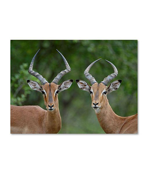 "Trademark Global Robert Harding Picture Library 'Animals 103' Canvas Art - 24"" x 18"" x 2"""