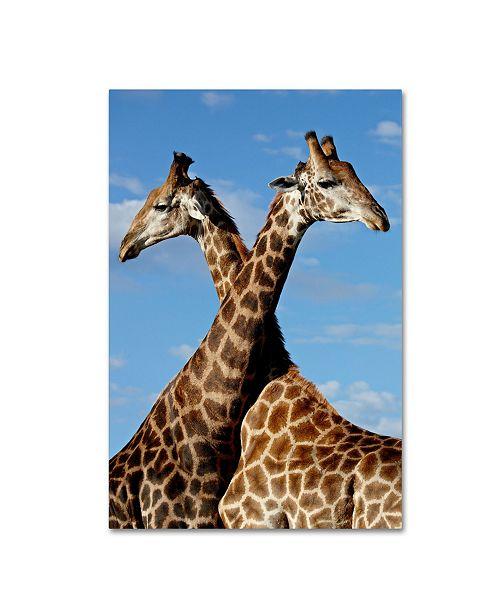 "Trademark Global Robert Harding Picture Library 'Two Giraffes' Canvas Art - 47"" x 30"" x 2"""