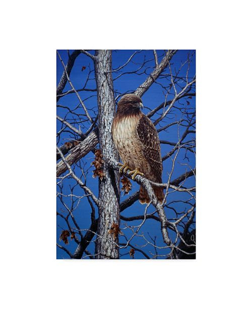 "Trademark Global Jeff Tift 'Red Tailed Hawk' Canvas Art - 24"" x 16"" x 2"""