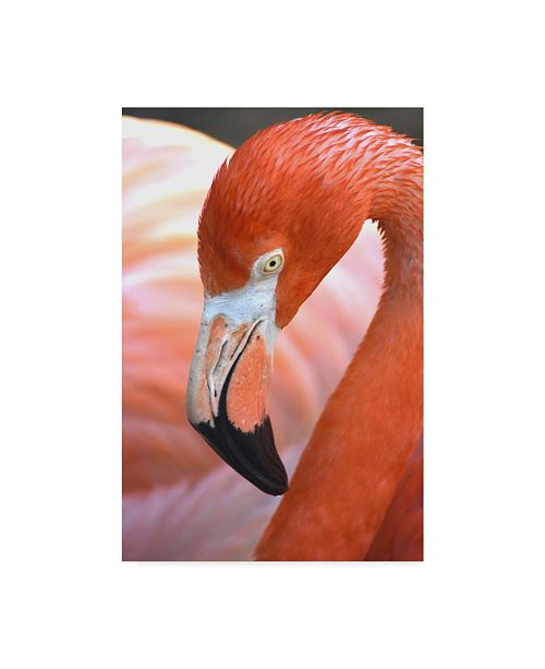 "Trademark Global Robert Michaud 'Flamingo Portrait' Canvas Art - 47"" x 30"" x 2"""