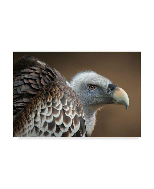 "Trademark Global Jimmy Hoffman 'Vulture On Brown' Canvas Art - 32"" x 2"" x 22"""