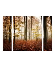 "Philippe Sainte-Laudy 'Calmness' Multi Panel Art Set Large 3 Piece - 44"" x 34"" x 2"""