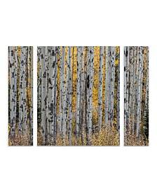 "Pierre Leclerc 'Aspen Trees' Multi Panel Art Set Large 3 Piece - 44"" x 34"" x 2"""