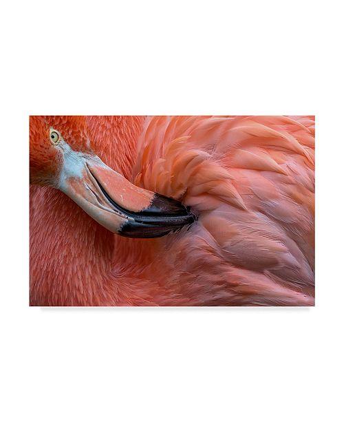 "Trademark Global Xavier Ortega 'Flamingo Close Up' Canvas Art - 32"" x 2"" x 22"""