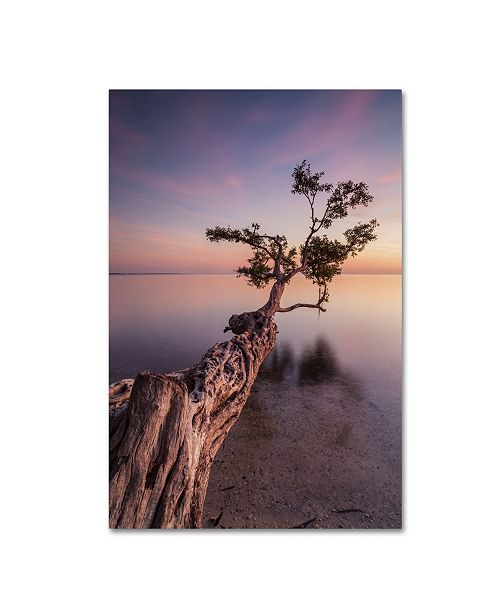"Trademark Global Moises Levy 'Water Tree IV' Canvas Art - 32"" x 22"" x 2"""