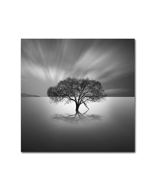 "Trademark Global Moises Levy 'Water Tree VIII' Canvas Art - 24"" x 24"" x 2"""