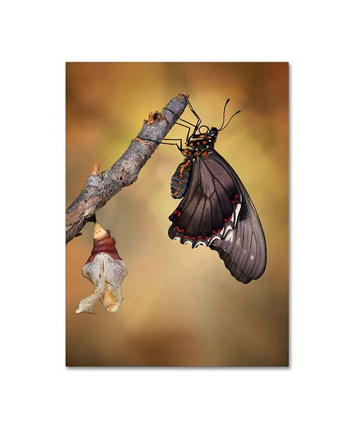 "Trademark Global Jimmy Hoffman 'Birth Of A Swallowtail' Canvas Art - 32"" x 24"" x 2"""