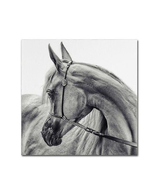 """Trademark Global Piet Flour Horse' Canvas Art - 24"""" x 24"""" x 2"""""""